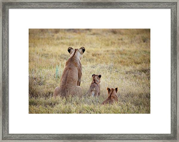 Mom And Cubs Framed Print