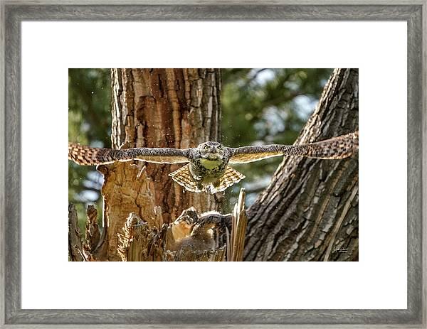Momma Great Horned Owl Blasting Out Of The Nest Framed Print