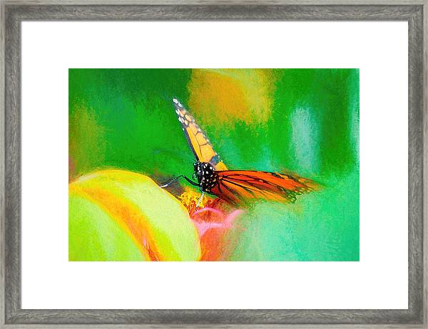 Monarch Butterfly Beautiful Smudge Framed Print