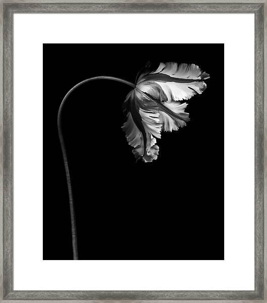 Monochrome Parrot Tulip Framed Print