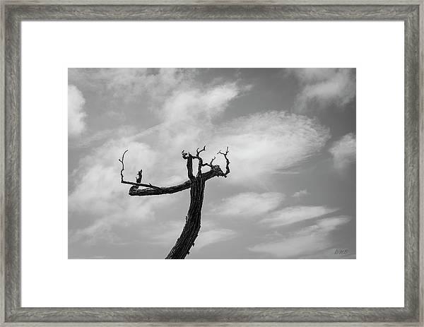 Monterey Peninsula Vi Bw Framed Print by David Gordon