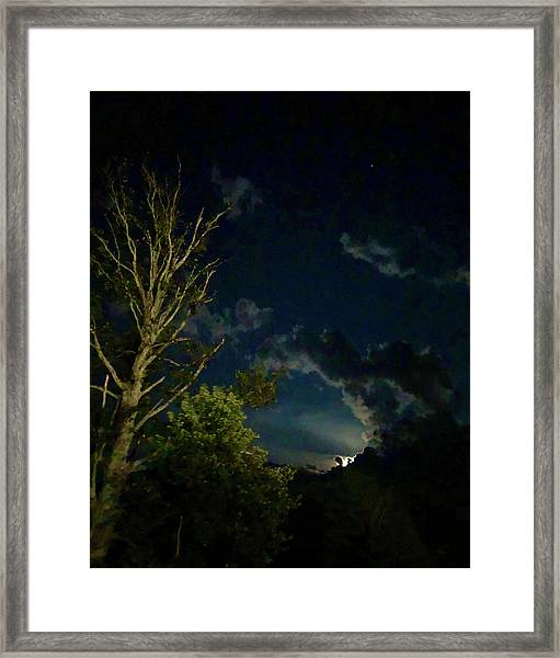 Moonlight In The Trees Framed Print