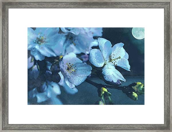 Moonlit Night In The Blooming Garden Framed Print