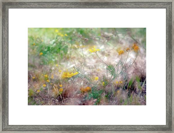 Morning Impressions Of Jaffa 2 Framed Print