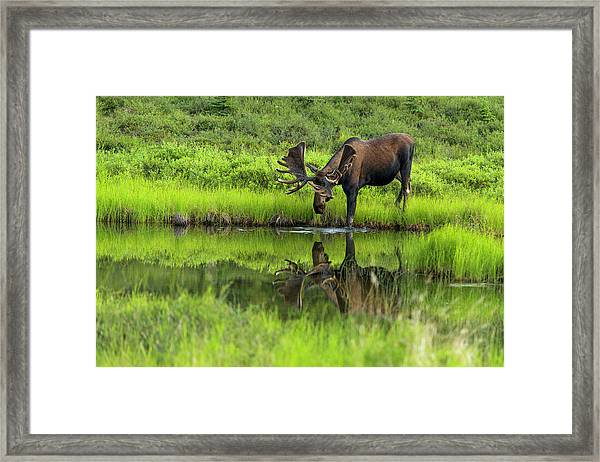 Morning Isolation Framed Print