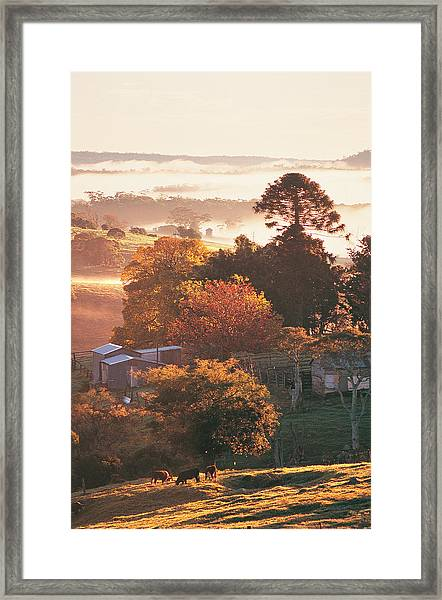 Morning Mist Over South Coast Farmland Framed Print by Auscape / Uig