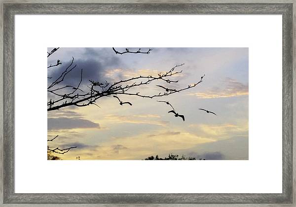 Morning Sky View Framed Print