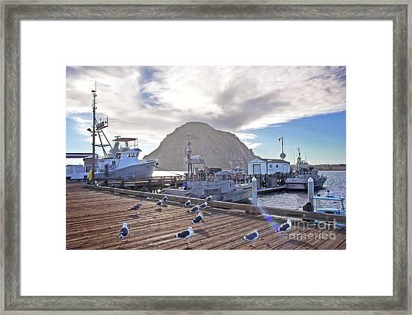 Morro Bay Harbor Framed Print