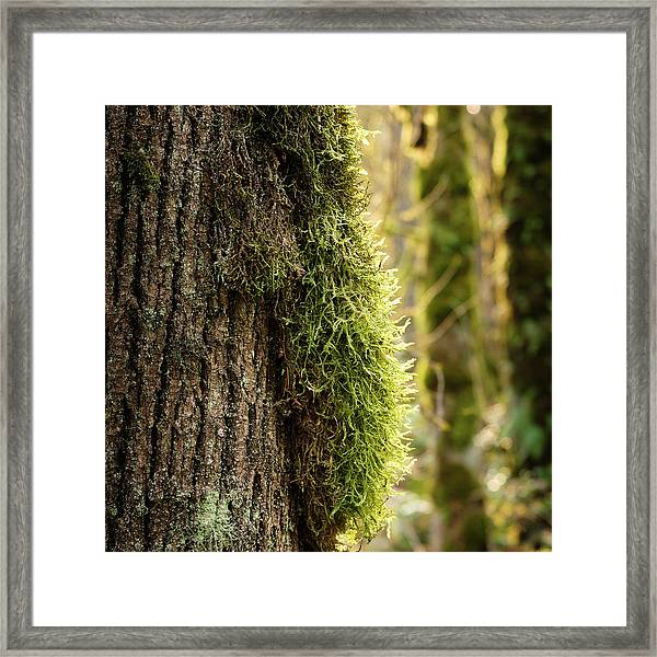 Framed Print featuring the photograph Moss On Bark by Whitney Goodey