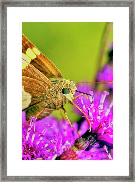 Moth On Purple Flower Framed Print