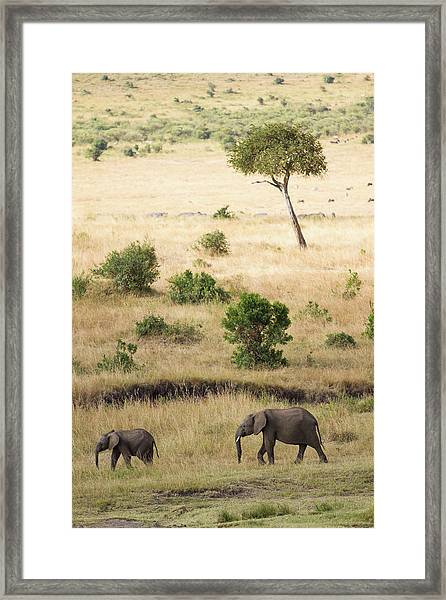 Mother And Baby Elephant In Savanna Framed Print by Universal Stopping Point Photography