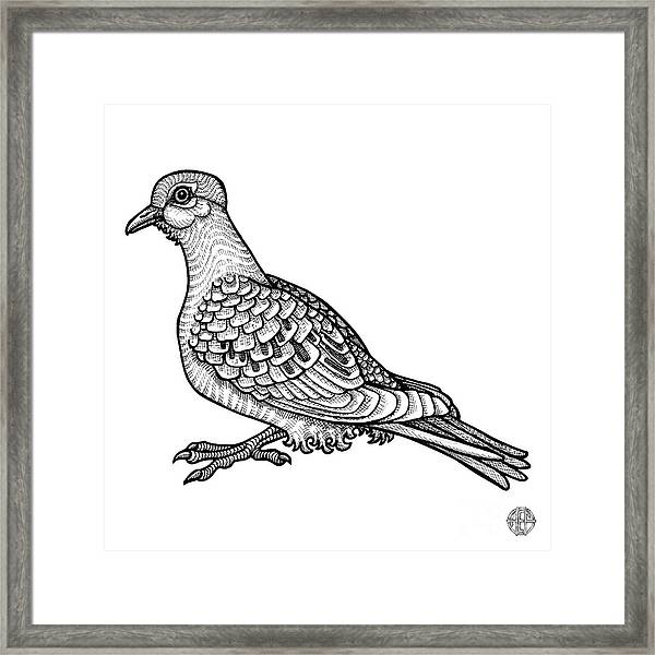 Framed Print featuring the drawing Mourning Dove by Amy E Fraser