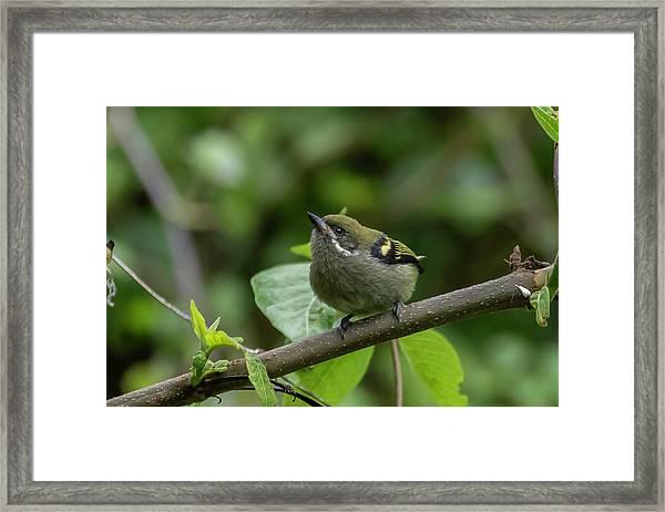 Moustached Tinkerbird Framed Print