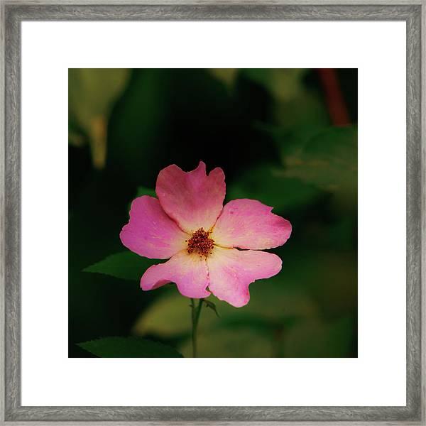 Multi Floral Rose Flower Framed Print