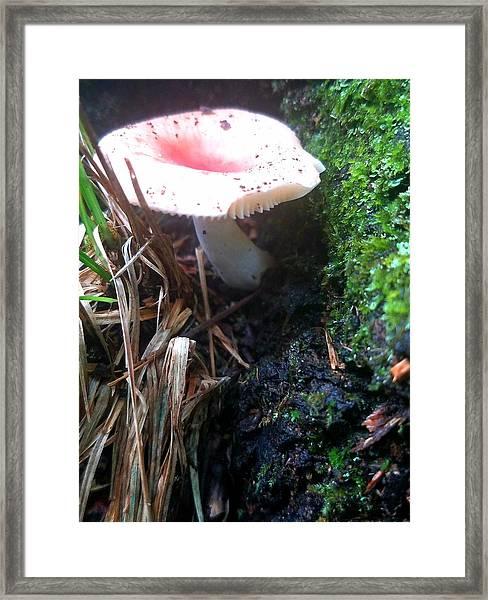 Mushroom Gully Framed Print