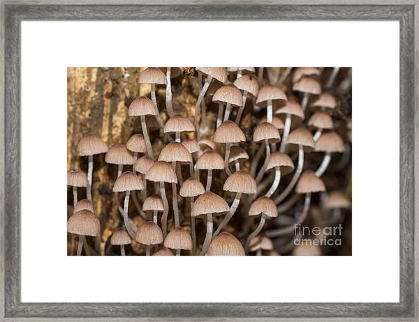 Mushroom In Rainforest Framed Print