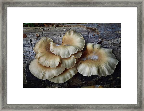 Mushrooms On Log Framed Print