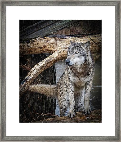 My Favorite Pose Framed Print