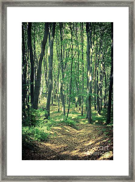 Mysterious Dark Forest Near Rzeszow Framed Print
