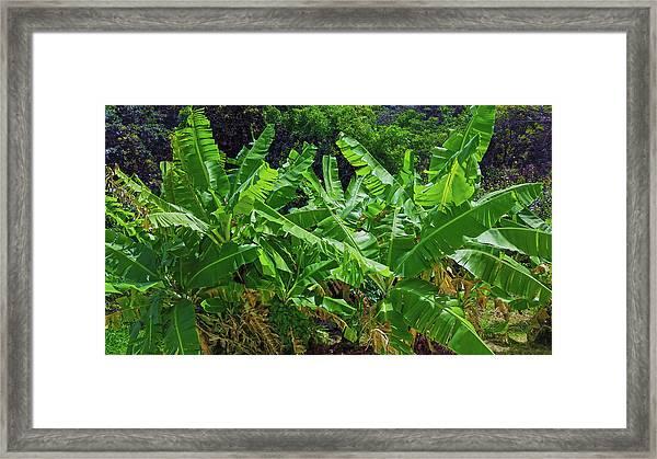 Nana Banana Framed Print
