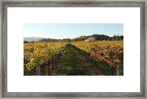 Napa Valley Vineyard In Autumn Framed Print by Leezsnow