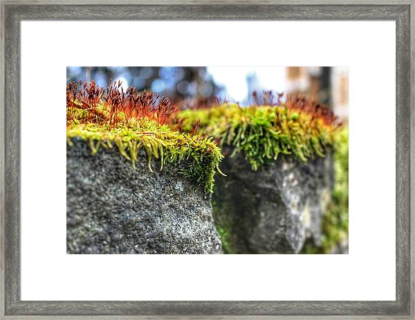 Nascent Framed Print