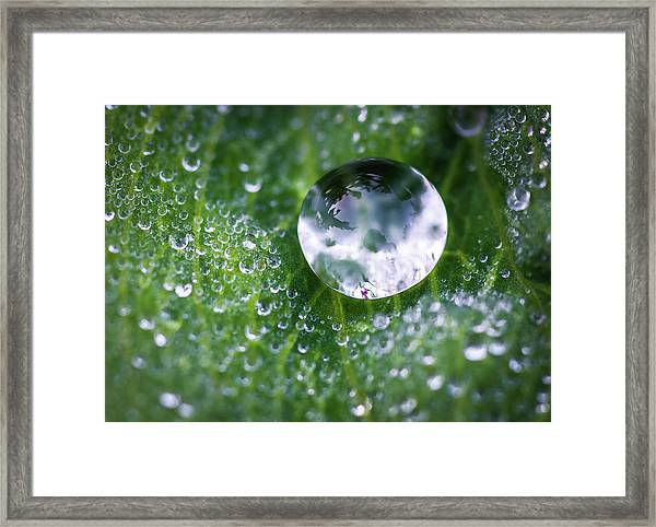 Natures Crystal Ball Framed Print