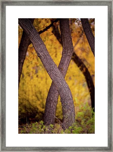 Nature's Font Framed Print