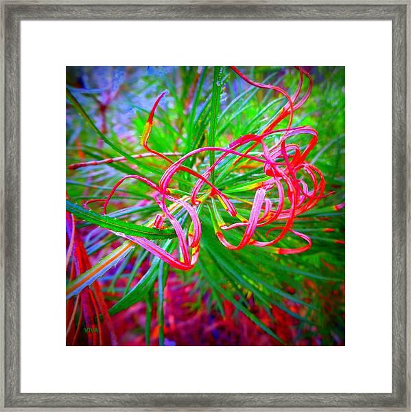 Nature's  Ribbons Framed Print