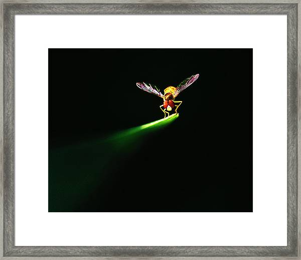 Natures Spotlight On An Insect Framed Print by Vicki Jauron, Babylon And Beyond Photography