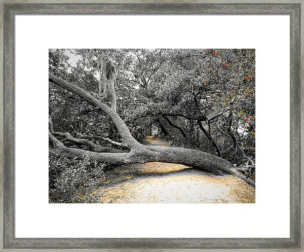 Nature's Way Framed Print