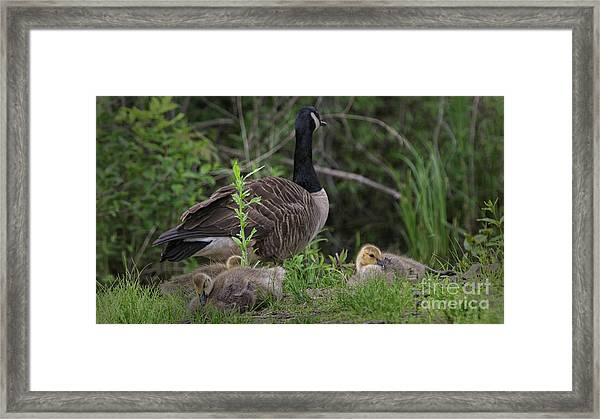 Nature's Gift  Framed Print