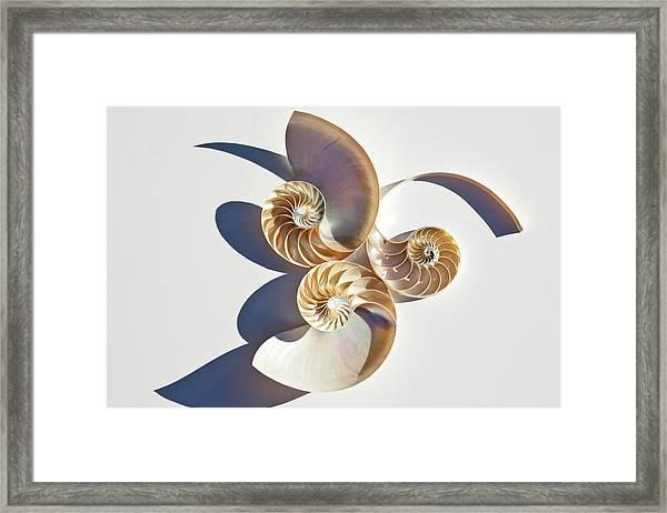 Nautilus 0425 Framed Print