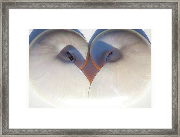 Nautilus 0432 Framed Print