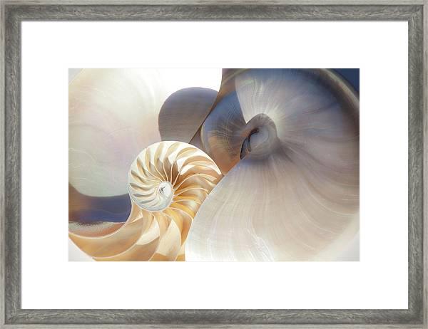Nautilus 0442 Framed Print
