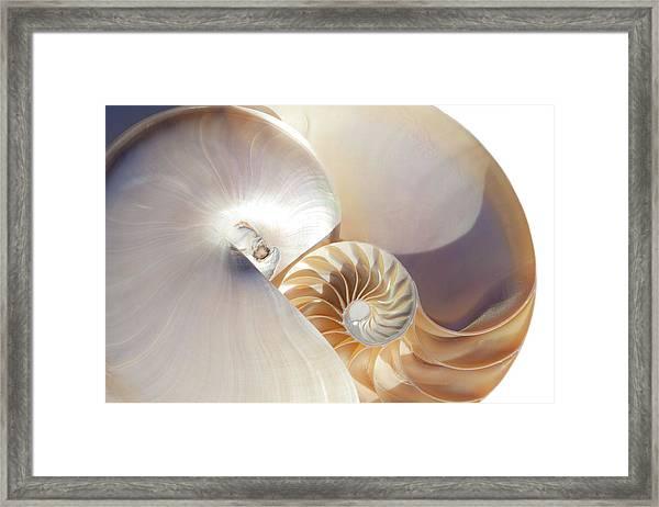 Nautilus 0454 Framed Print