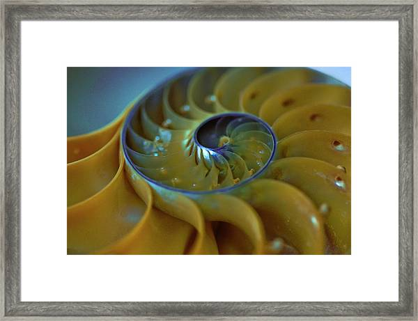 Nautilus Framed Print by By Ken Ilio