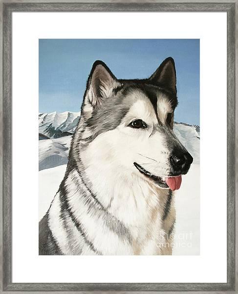 Nayuk Alaska Malamute Framed Print