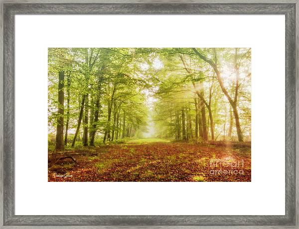 Neither Summer Nor Winter But Autumn Light Framed Print