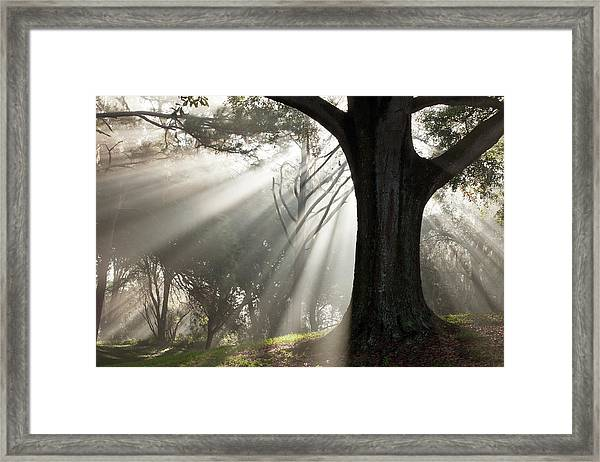 New Beginning Framed Print