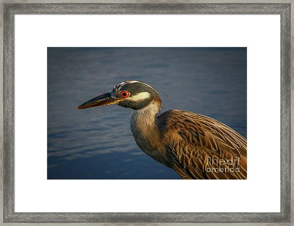 Framed Print featuring the photograph Night Heron Portrait by Tom Claud
