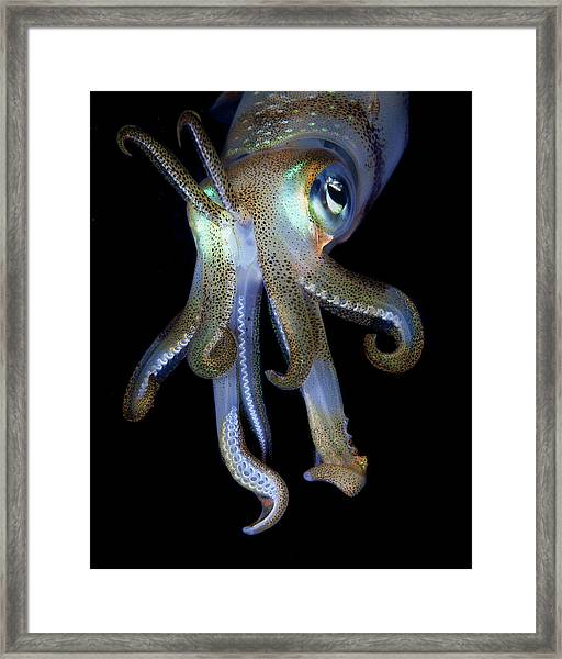 Night Observer Framed Print
