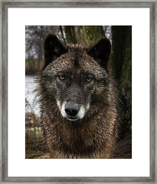Niko Portrait Framed Print