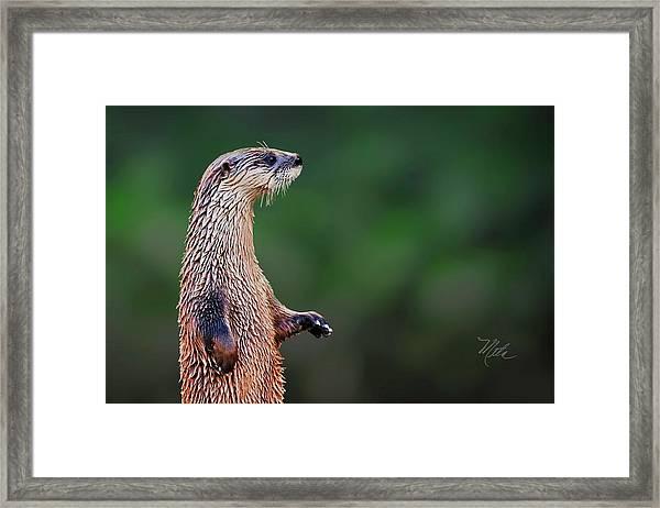Norman The Otter Framed Print