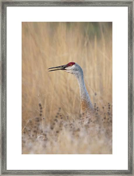 Not A Weed Framed Print