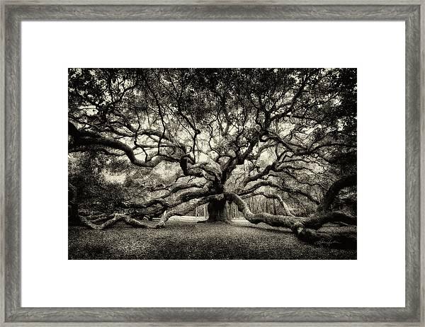 Oak Of The Angels - Sepia Framed Print