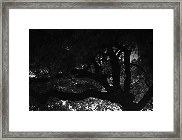 Oak Tree At Night Framed Print by Edward Swearingen
