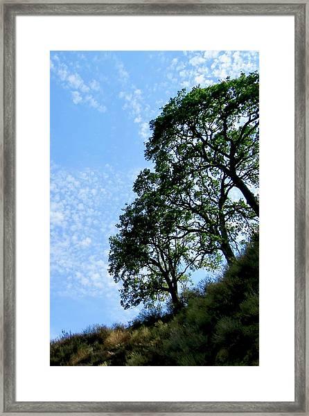 Oaks And Sky Framed Print