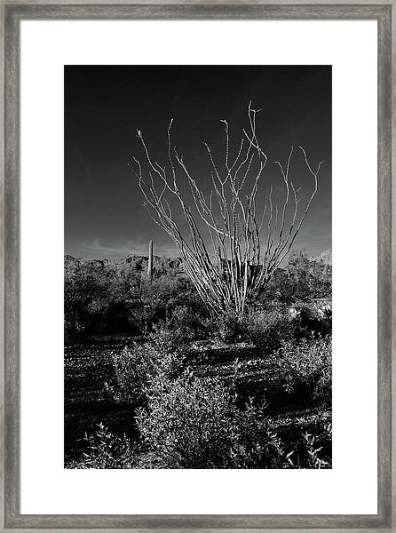 Framed Print featuring the photograph Ocotillo Black And White by Chance Kafka