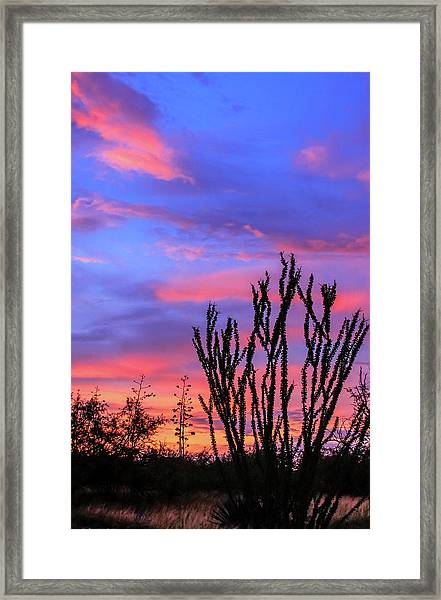Framed Print featuring the photograph Ocotillo Sunset 1 by Dawn Richards
